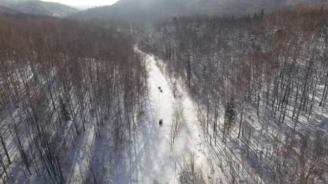 Areal shot of cars speeding along forest road during race on snow