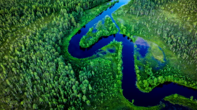 areal shot of meandering river in boreal forest - scandinavia - river stock videos & royalty-free footage