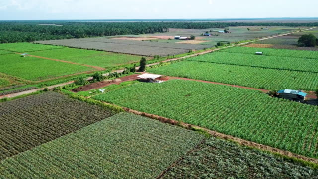 areal view of green corn field farmland - johor stock videos & royalty-free footage