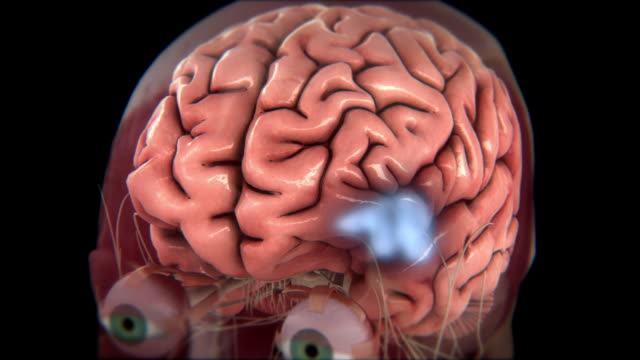 vidéos et rushes de areas of a brain light up with activity. - human brain