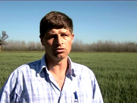 argentina's farmers are suffering heavily under the global financial crisis. with demand for cereals falling around the world, prices are plummeting... - buenos aires province stock videos & royalty-free footage