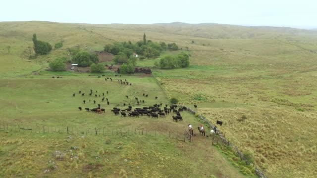 argentinische gauchos hüten rinder zurück auf die ranch - herding stock-videos und b-roll-filmmaterial