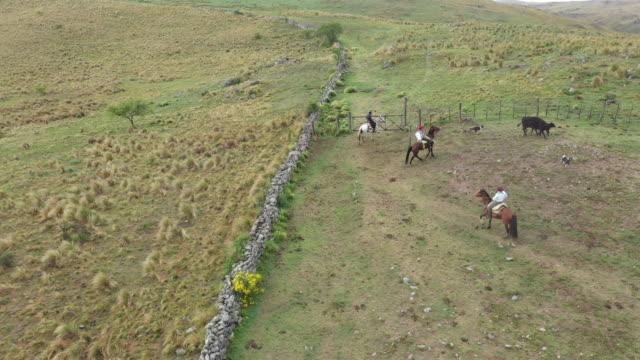 gauchos argentini a cavallo con cani e bovini - argentina video stock e b–roll