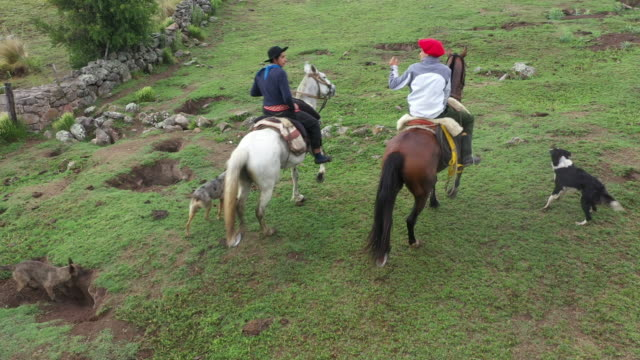argentine gauchos riding through ranch grassland - cultura argentina video stock e b–roll