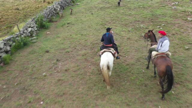 vídeos de stock, filmes e b-roll de gaúchos argentinos cavalgam com cães através de pastagens de rancho - ranch
