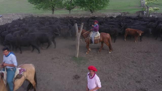 argentine gauchos working aberdeen angus cattle herd - cultura argentina video stock e b–roll