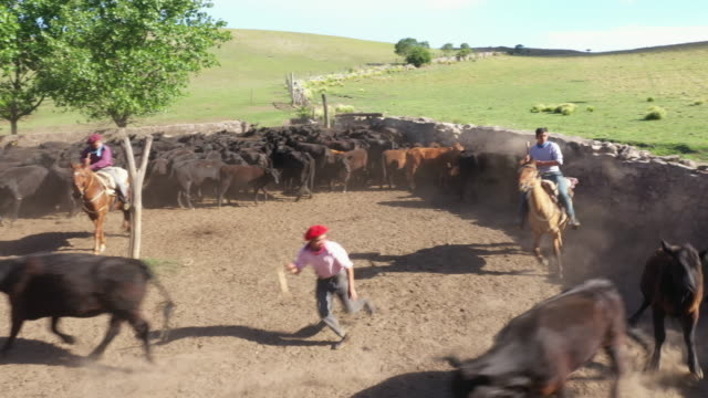 argentine gauchos working and sorting cattle herd - cultura argentina video stock e b–roll