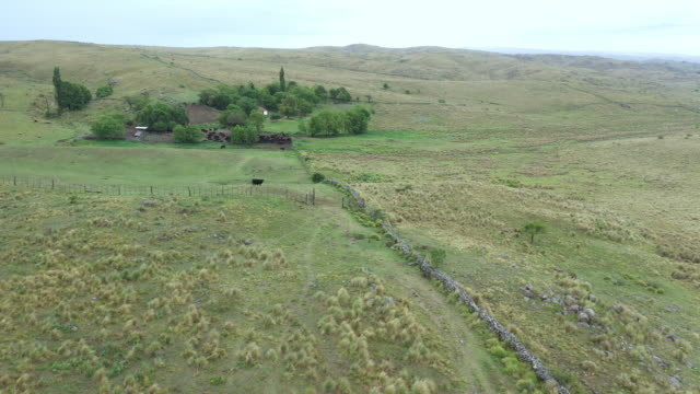 ranch argentino circondato da praterie primaverili di pampas - argentino video stock e b–roll