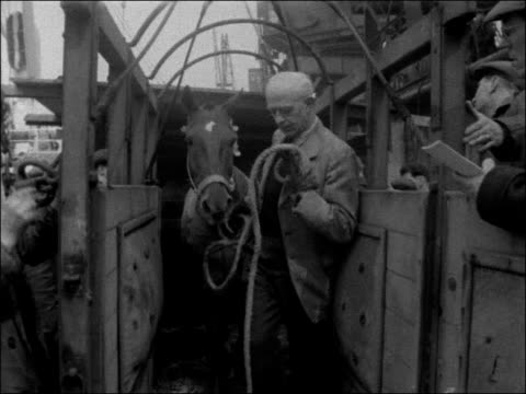 argentinian horses arrive to compete in europe england greater london rotherhithe ship docked in port / cu ship's name st thomas / ms ponies in... - greater london stock videos and b-roll footage