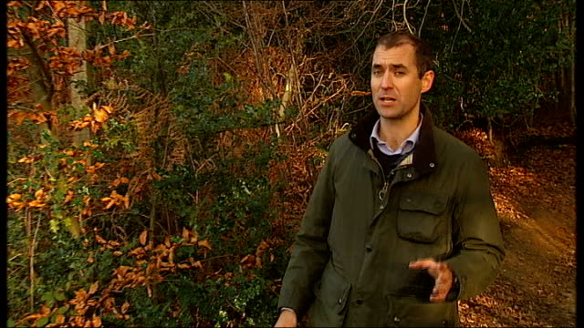 argument continues over sale of public forests to private sector surrey holmbury st mary pasture wood ext reporter to camera as arrives at 'auction... - bracken stock videos and b-roll footage