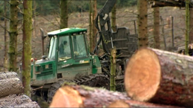 vídeos de stock, filmes e b-roll de argument continues over sale of public forests to private sector wales afan valley forest park ext felled lumber with skidder working in background... - forester