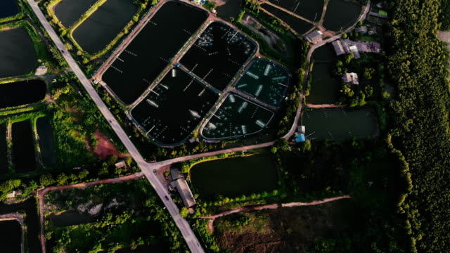 arial view of shrimp farm and fishing farm - zoom in stock videos & royalty-free footage