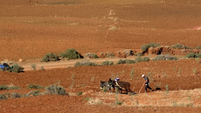 arid climate. plowing field - plowing stock videos & royalty-free footage
