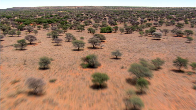 arid woodland  - aerial view - northern cape,  frances baard district municipality,  sol plaatjie,  south africa - bush stock videos & royalty-free footage