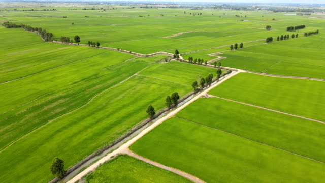 vídeos de stock e filmes b-roll de ariel view of rice field and mountain in thailand - estéril