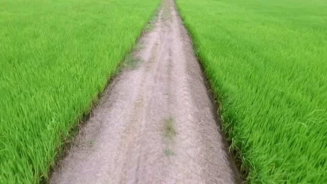 Luftansicht von Reisfeld in Thailand und die Berge