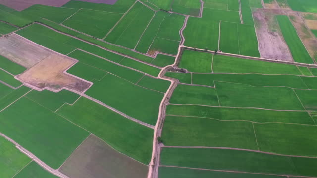 ariel view of rice field and mountain in thailand - legume family stock videos and b-roll footage