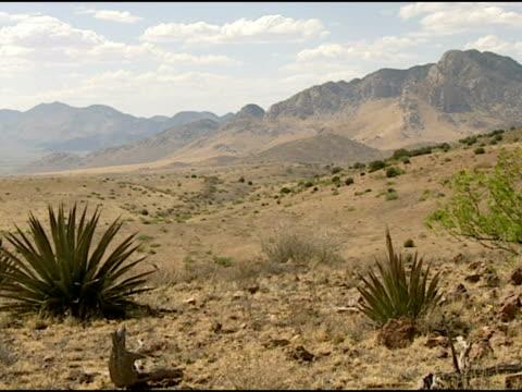 arizona desert landscape. - 熱帯の低木点の映像素材/bロール