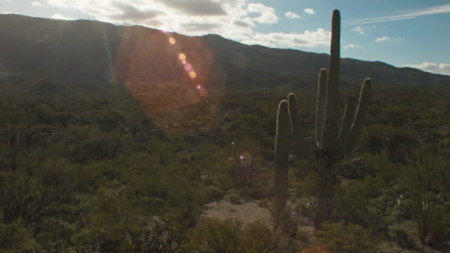 arizona desert landscape with cacti - cactus sunset stock videos & royalty-free footage