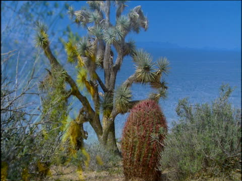 Arizona desert plant life