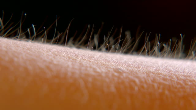 arm hairs - sollevare video stock e b–roll
