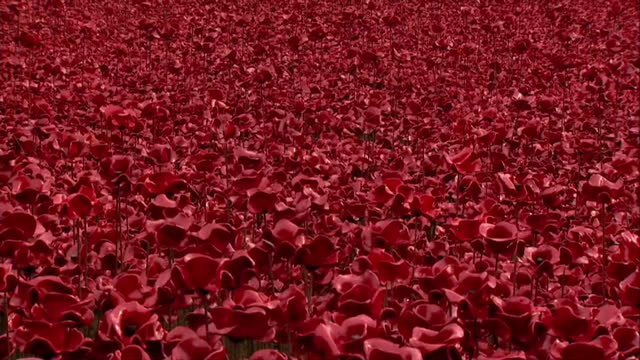 vídeos y material grabado en eventos de stock de armistice day 2014 clean showing exterior shots of ceramic poppies field 'blood swept lands and seas of red' installation with trumpeter playing the... - instrumento de viento