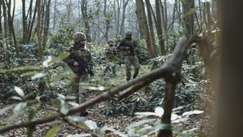 army exercise in forrest - army stock videos & royalty-free footage