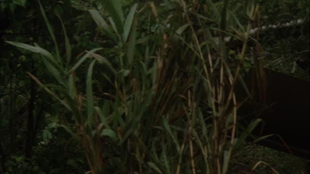 vídeos de stock e filmes b-roll de cu army helicopter crash in jungle - acidente de avião