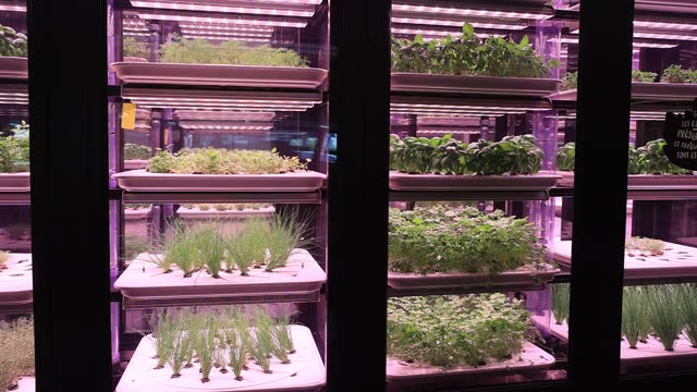 aromatic herbs grow in a window of the german start-up specialized in the installation of urban farms infarm at a store of the brand metro, food... - electric lamp stock videos & royalty-free footage