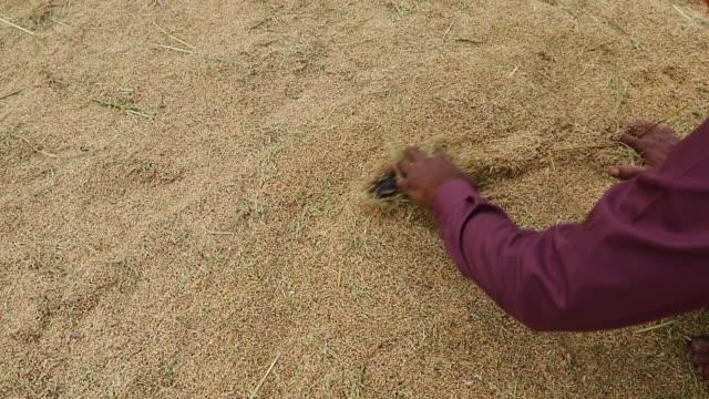aromatic paddy drying process in dhaka - 麦わら帽子点の映像素材/bロール