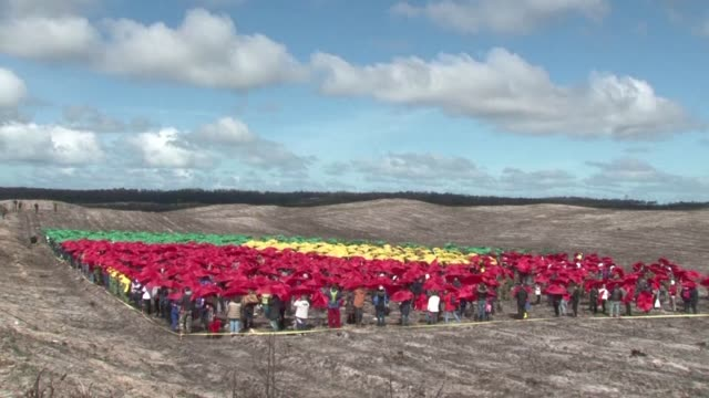 around 3000 volunteers on sunday began an ambitious reforestation project in portugal's oldest forest ravaged by last year's devastating wild fires - reforestation stock videos and b-roll footage