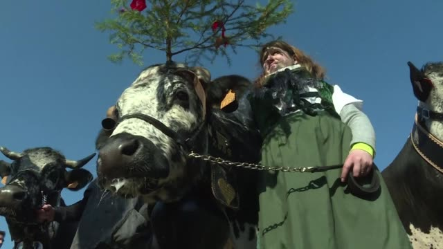 Around thirty cows and sheep from French farms were walked on the streets of Paris on Friday on the eve of the opening of the International...