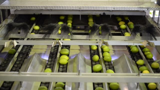 arrival of lemons from fields to cota´s industrial lemon plant as they are scanned and packaged in tafi viejo province of tucumán north argentina on... - lemon fruit stock videos & royalty-free footage