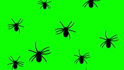 Arthropods running up