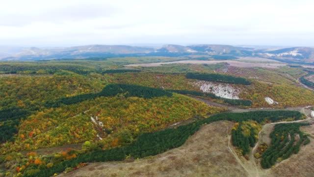 丘の上の航空: 人工林農園 - クワッドコプター点の映像素材/bロール