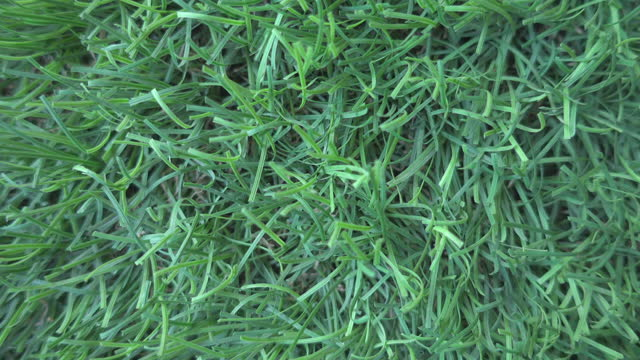artificial grass background close up truck shot - dolly shot stock videos & royalty-free footage