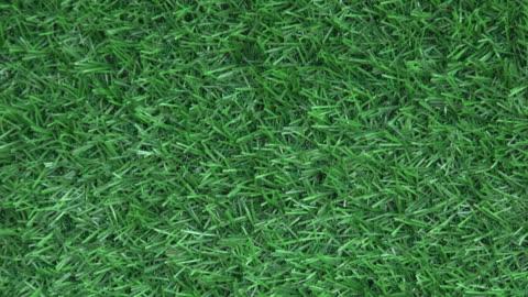 vídeos y material grabado en eventos de stock de fondo de hierba artificial - hierba familia de la hierba