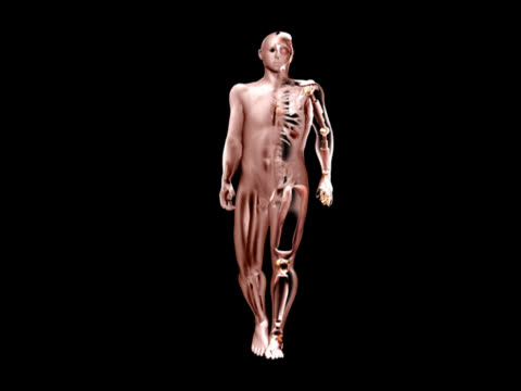 vídeos y material grabado en eventos de stock de artificial human body walking - ilustración biomédica
