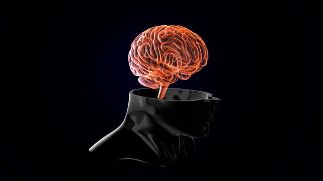 vídeos y material grabado en eventos de stock de cerebro humano artificial loopable - telencéfalo