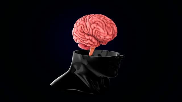 vídeos de stock, filmes e b-roll de cérebro humano artificial - telencéfalo