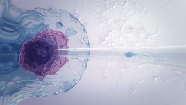 vídeos y material grabado en eventos de stock de inseminación artificial - embrión etapa humana