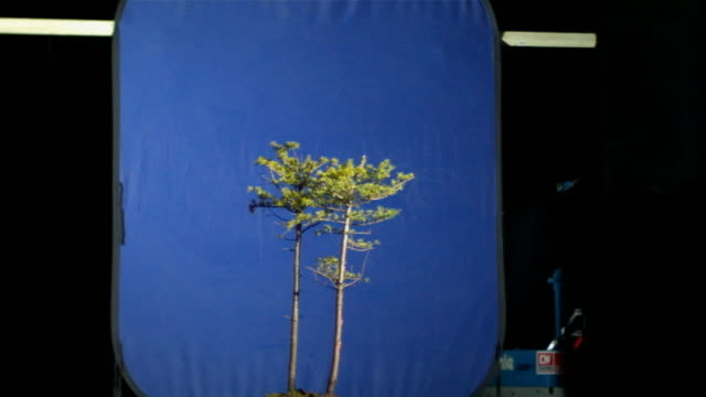 artificial lightning strikes trees that stand in front of a blue screen. - scientific experiment stock videos & royalty-free footage