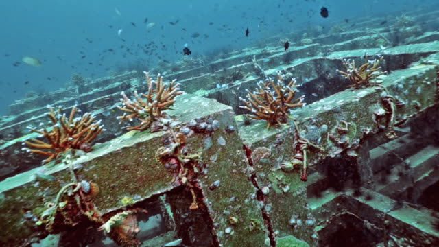 artificial reef underwater coral nursery innovative environmental conservation project - ocean acidification stock videos and b-roll footage