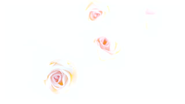 stockvideo's en b-roll-footage met artificial roses bouquet - exposure variation - overexposed