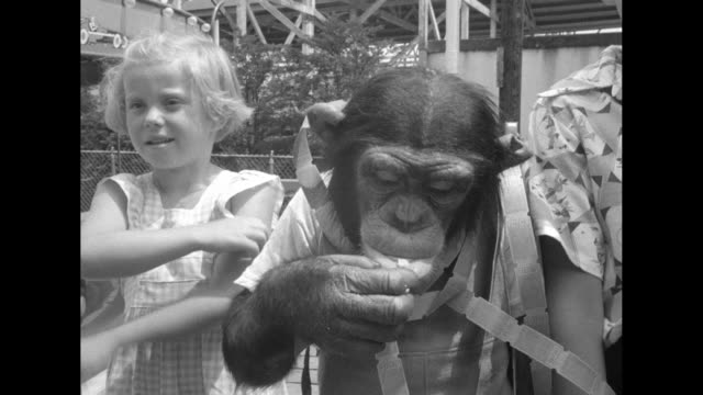 as a little boy and girl look on albert the chimpanzee buys tickets that end up around his neck the chimp wears human clothing / vs he rides a... - human neck stock videos & royalty-free footage