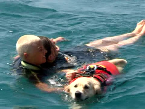 as crowds flock to italy's beaches during the busy summer holidays a special squad of rescue workers is on guard some 300 dogs specially trained to... - bagnino video stock e b–roll