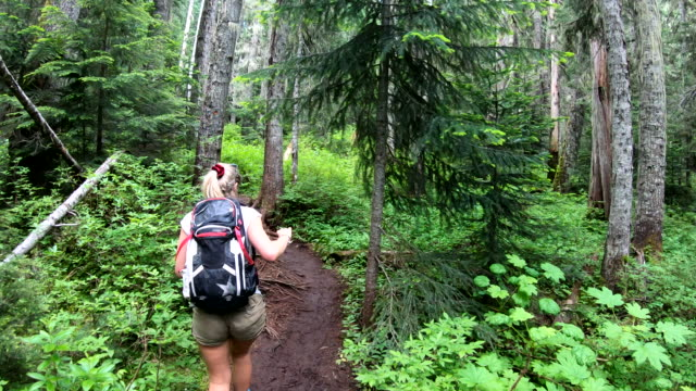 pov as hiker walks through temperate rainforest - the way forward stock videos & royalty-free footage