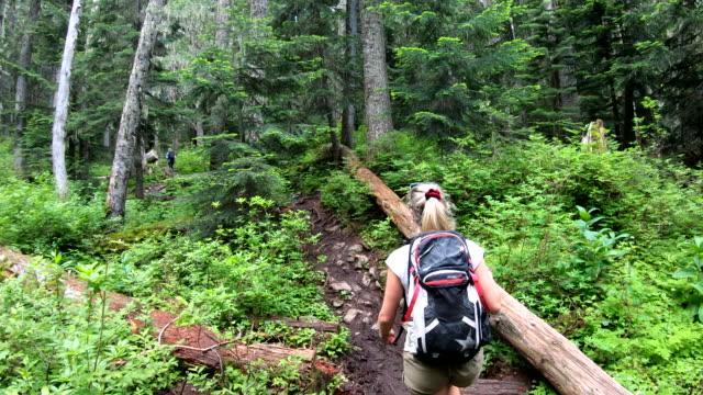 pov as hiker walks through temperate rainforest - temperate rainforest stock videos & royalty-free footage