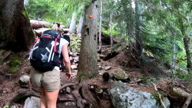 pov as hikers walk through temperate rain forest - rucksack stock videos & royalty-free footage