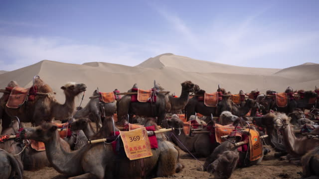 As one of famous travel destinations beside Mogao Caves in Dunhuang not only for the beautiful scenery of desert the Mingsha Shan desert is also a...
